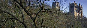 tree branches, durham cathedral
