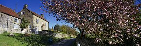 cherry blossom at hutton le hole - ym0216