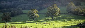 trees and shadow, herefordshire